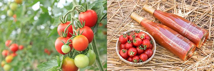 有機JAS(化学合成農薬・化学肥料不使用)に認定されているイナゾーファームの看板商品中玉トマト(左)とトマトジュース(右)(写真提供:イナゾーファーム)